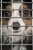 foto of stray dog  - Closeup of a dog looking through the bars of a cage - JPG