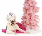 princess dog - english bulldog dressed up like a princess laying beside a pink tree