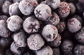stock photo of aronia  - Frozen Choke berry closeup - JPG