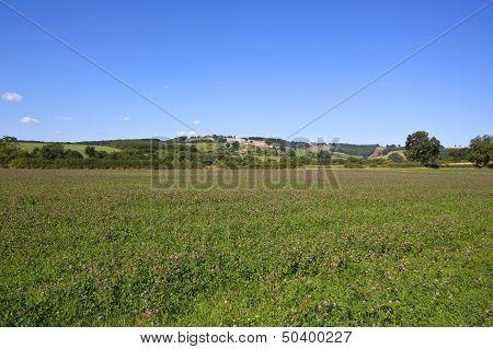 Red Clover Fields