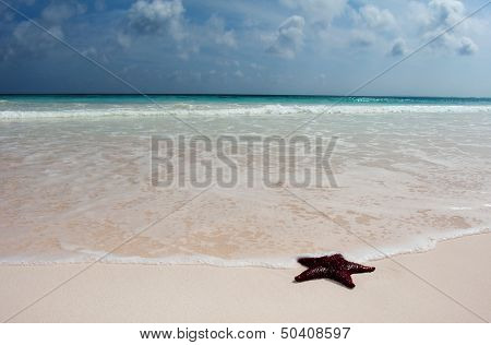 Red cushion starfish in the surf on a idyllic beach
