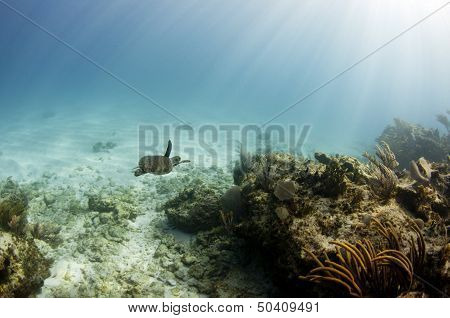 Turtle in Ocean Seascape