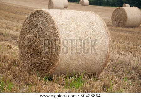 Bales of hay in a field in Switzerland