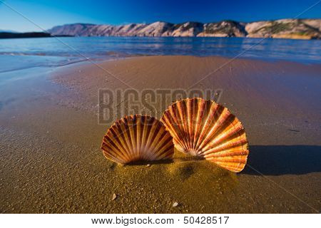 Beautiful landscapes shells on the beach in Croatia