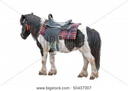 Nice Pony