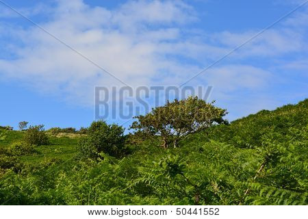 Fairlight England Trees and Plants Tropical