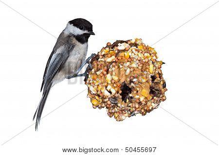 Chickadee, Pine Cone & Peanut Butter
