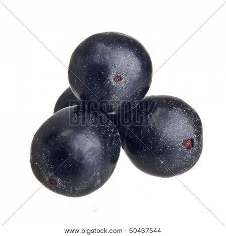 Amazon acai fruit isolated on white background.