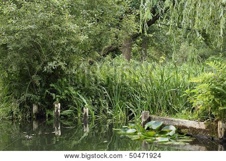 Riparian Zone Of A Small Stream In The Spreewald