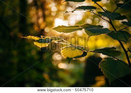 Autumn Poetic Landscape