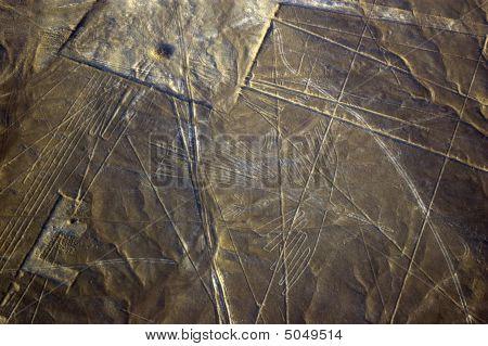 Condor, Nazca Lines In Peru
