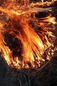 stock photo of inflamed  - body of flame inflaming in the field - JPG