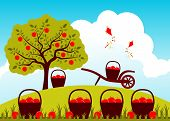 picture of orchard  - vector baskets of apples and hand barrow in apple orchard - JPG