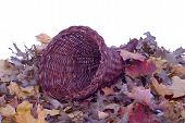 picture of cornucopia  - A wicker cornucopia laying on colorful fall leaves - JPG