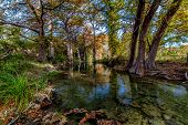 stock photo of opulence  - Large Cypress Trees with Stunning Fall Color Lining an Amazing Crystal Clear Texas Hill Country Stream - JPG