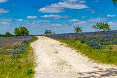 stock photo of dirt road  - A Rural Texas Dirt Road in a Field Blanketed with the Famous Texas Bluebonnet  - JPG