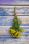 image of tansy  - medical herb Common Tansy  - JPG