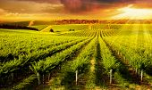 image of sun flare  - A Beautiful Sunset over vineyard in South Australia - JPG