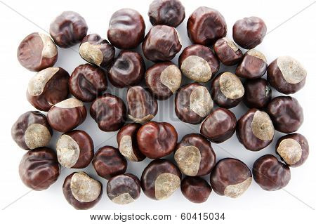 Chestnut Isolated