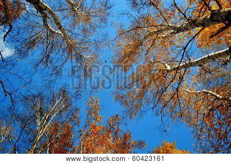 Autumn etudes