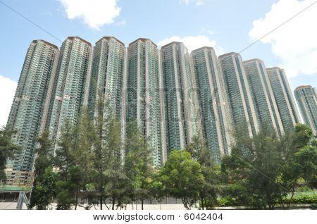 High Condominium Tree Day