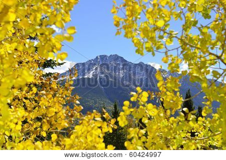 Colorado Mountain View Thorugh Yellow Aspen Leaves Like A Window During Foliage Season