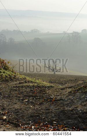 Misty Countryside Near Aurndel. England