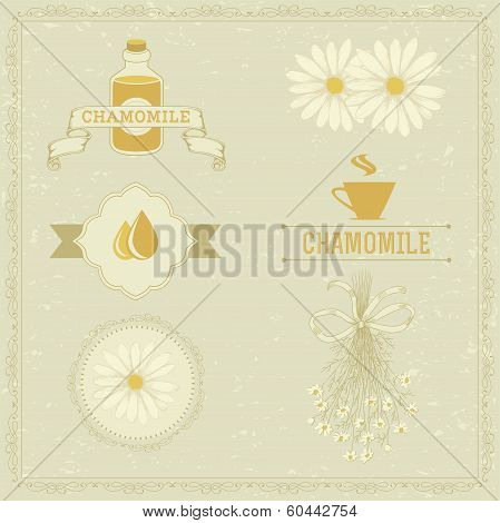 chamomile, camomile,  herb flower,