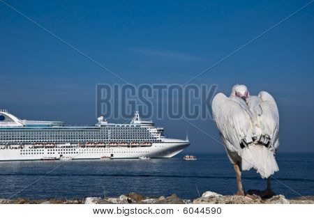 Sleepy pelicans resting by the sea, against the background of a cruise liner