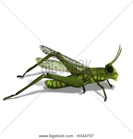 Green Grasshopper