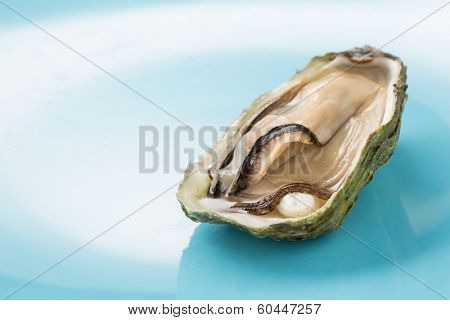 oyster with a pearl on a blue background- shallow DOF