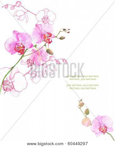 Painted watercolor card with orchid and place for text