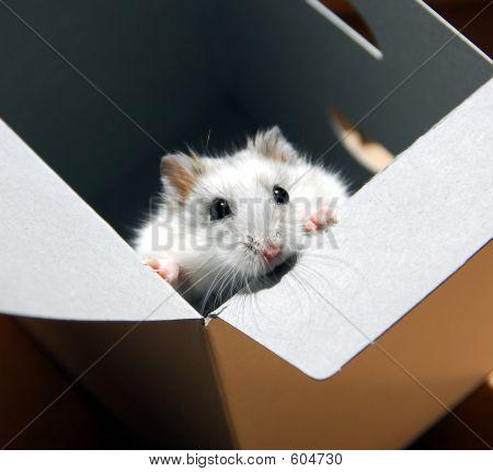 Hamster In A Box