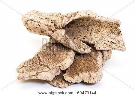 Bark Cork Oak Tree Dry