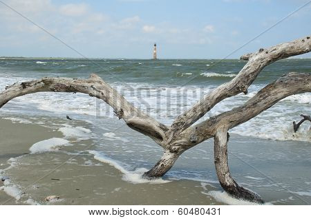 Morris Island Lighthouse And Driftwood