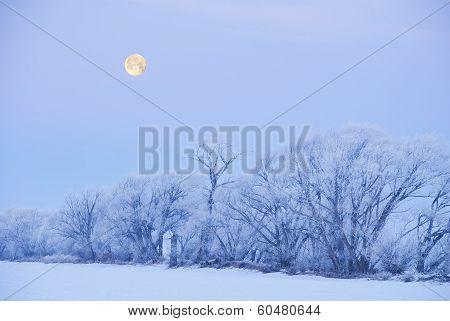 Winter Moonset