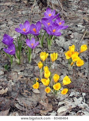 Spring Rebirth