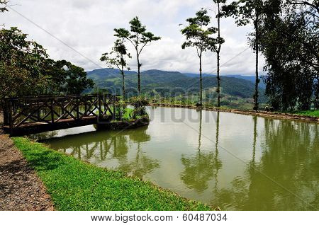 Tilapia Farming Pool