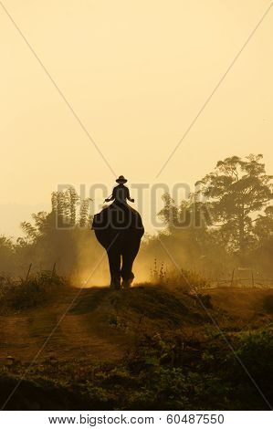 Silhouette Of People Ride Elephant On Path