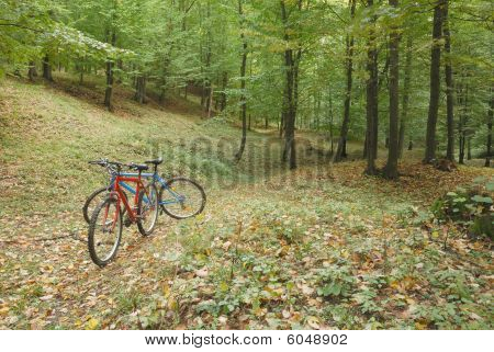 bikes in nature