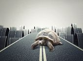 stock photo of tortoise  - hufe tortoise on abstract road - JPG