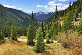 stock photo of blue spruce  - spruce and pine trees and mountains of Colorado - JPG