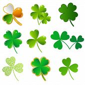 picture of st patty  - vector green shamrock collection on white background - JPG