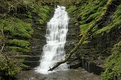 picture of low-necked  - Water-Break-Its-Neck waterfall Warren Woods Radnor Forest Wales