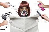 foto of wig  - hairdresser dog holding a white blank newspaper or magazine - JPG