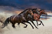 picture of chestnut horse  - Three horses run gallop with clouds of dust - JPG