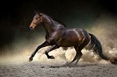 pic of chestnut horse  - Horse run gallop with clouds of dust