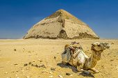 picture of the great pyramids  - A row of camels transport tourists in front of all of the Dakshur Pyramids in Cairo - JPG