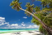 picture of boracay  - Tropical beach with palm and white sand Philippines - JPG