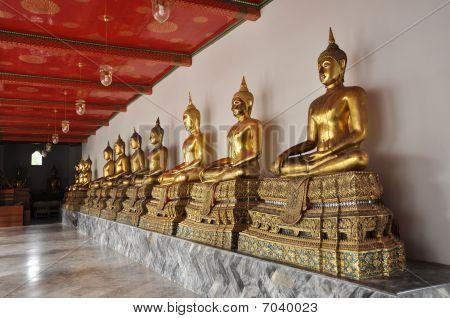 Buda de ouro linha compor conjunto